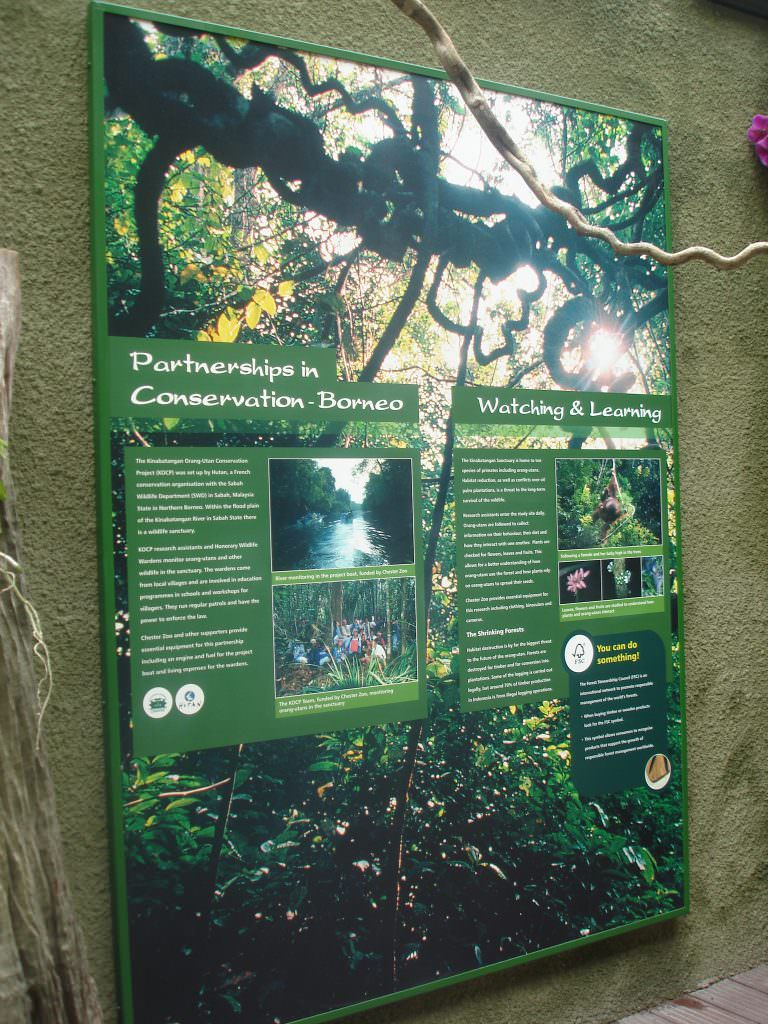 A large wall mounted interpretation panel in a Zoo explaining Conservation in Borneo.  Sign in an aluminium frame.