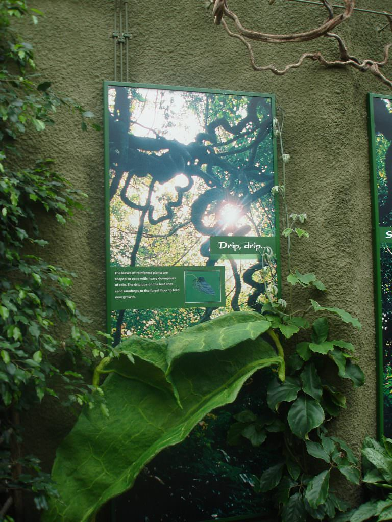 A wall mounted information panel surrounded by forest greenery with a dramatic, sunlight rainforest photograph