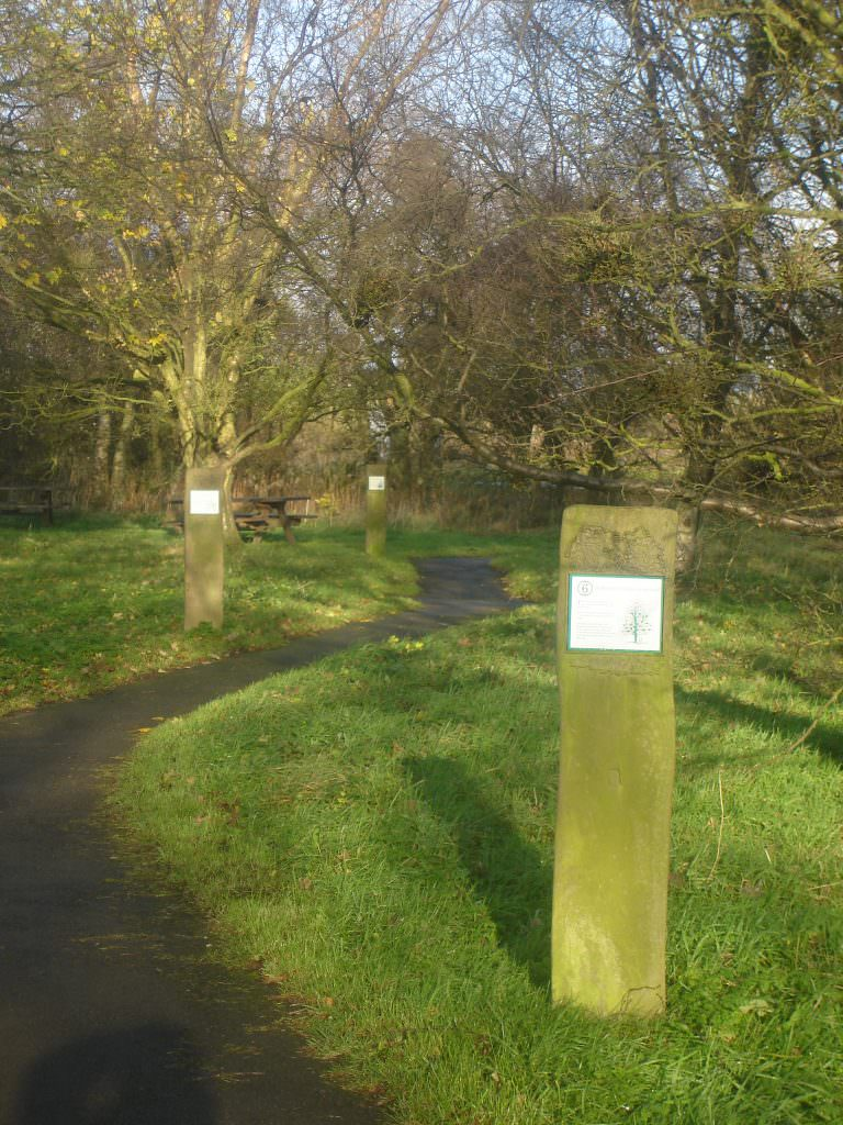 A series of sandblasted timber trail markers in a country park.  Each marker has a small full colour interpretation plaque giving wildlife information